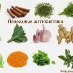 Натуральные природные антибиотики