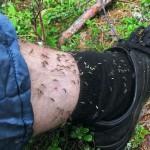 Средство от комаров и мошек фото