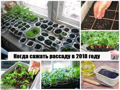 КОГДА САЖАТЬ РАССАДУ В 2018 ГОДУ