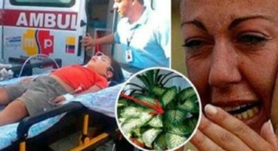 Мой сын погиб из-за этого ″цветка″! Ребенка убивает за 1 минуту, взрослого — за 15