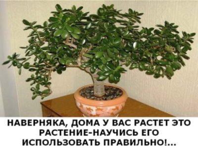 Наверняка, дома у вас растет это растение-научись его использовать правильно!