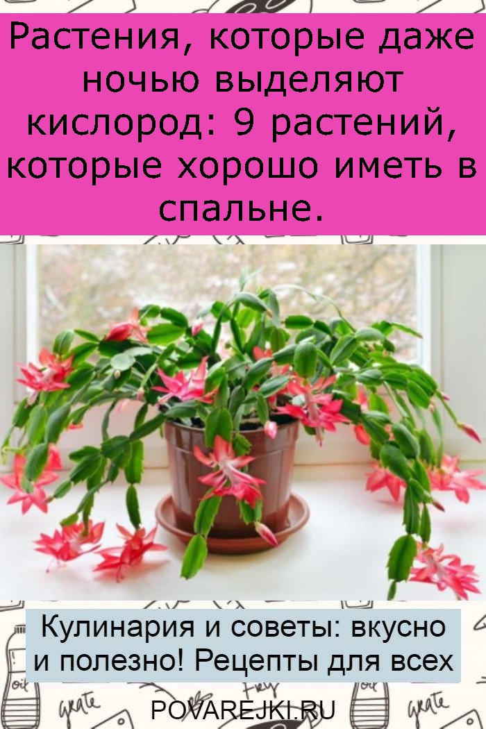 Растения, которые даже ночью выделяют кислород: 9 растений, которые хорошо иметь в спальне.