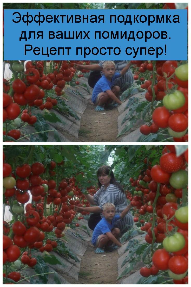 Эффективная подкормка для ваших помидоров. Рецепт просто супер 4