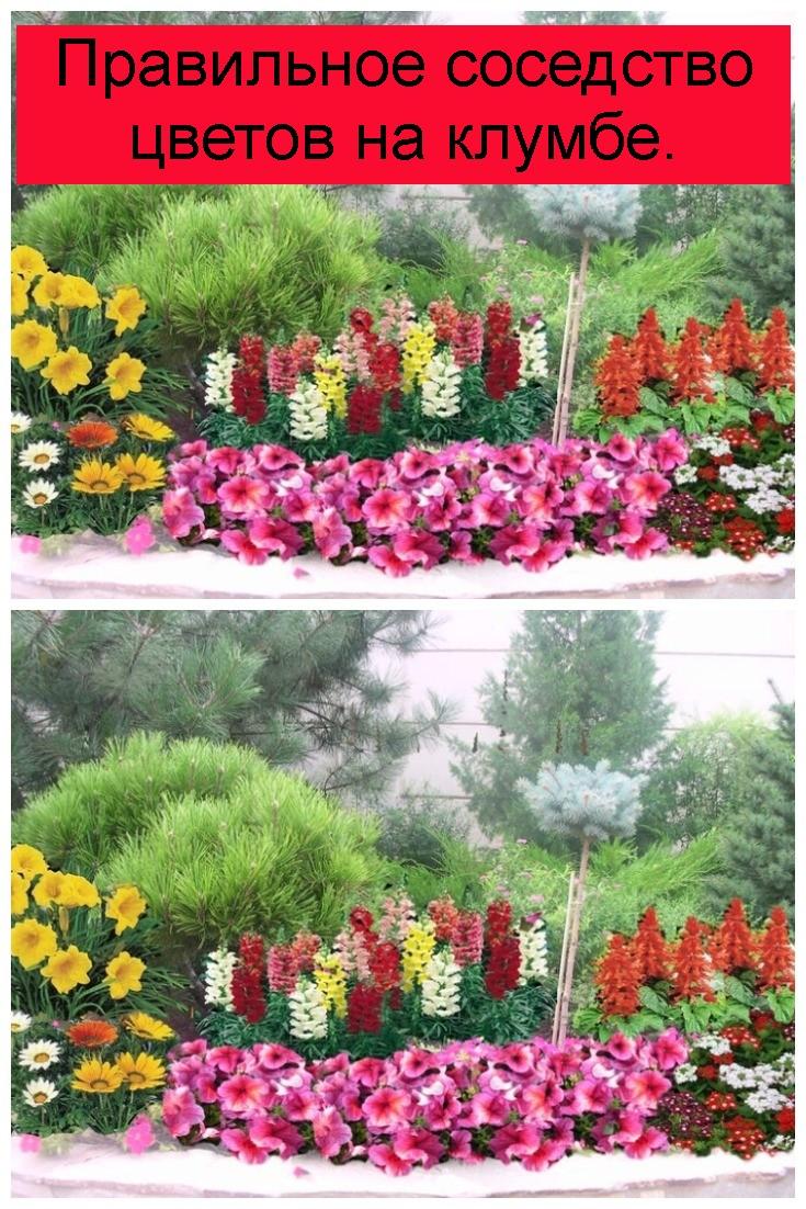 Правильное соседство цветов на клумбе 4