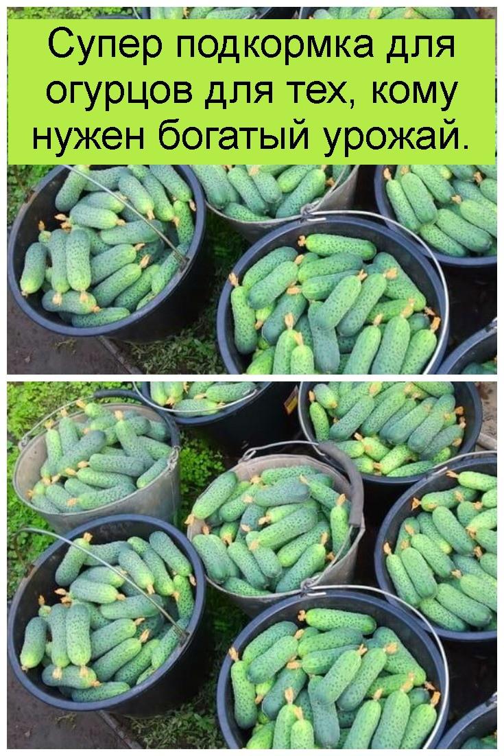 Супер подкормка для огурцов для тех, кому нужен богатый урожай 4