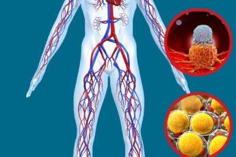 Элементарный продукт для сосудов, похудения и профилактики рака 1