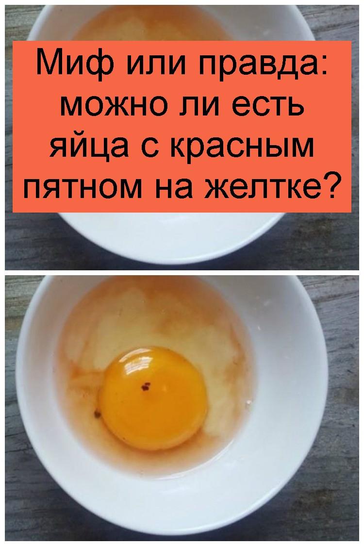 Миф или правда: можно ли есть яйца с красным пятном на желтке 4