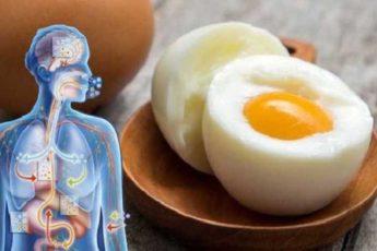 Куриное яйцо — лечебное средство. Рецепты наших бабушек 1